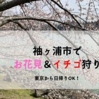 袖ヶ浦公園のお花見