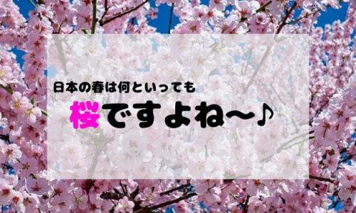 桜ですよね
