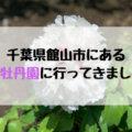 牡丹や芍薬が600株!千葉県館山市の北口牡丹園に行ってきました。【入場無料】